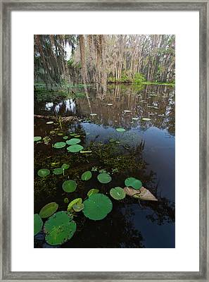 Caddo Lake, Texas's Largest Natural Lake Framed Print by Larry Ditto