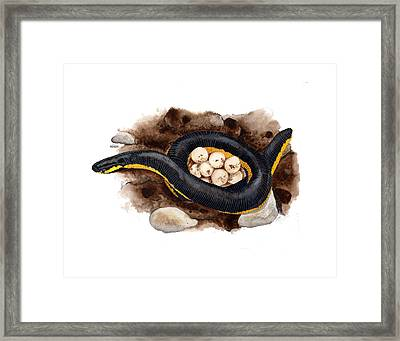 Caecilian Framed Print by Cindy Hitchcock