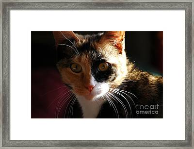 Framed Print featuring the photograph Cali by Christiane Hellner-OBrien