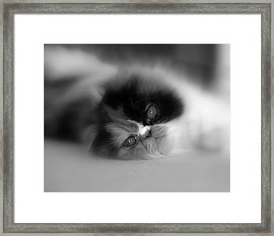 Cali Eyes Framed Print
