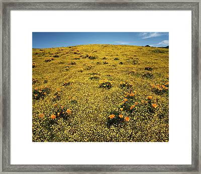 California, Cleveland National Forest Framed Print by Christopher Talbot Frank
