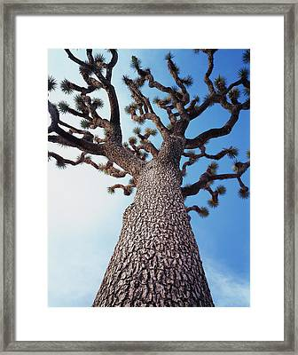 California, Joshua Tree National Park Framed Print
