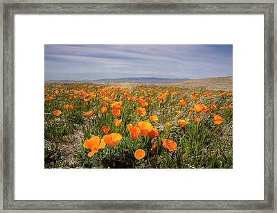 California Poppies In Bloom, Lancaster Framed Print by Rob Sheppard