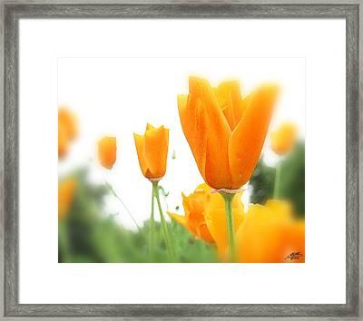 California Poppies Framed Print by Steve Huang