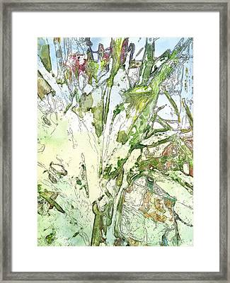 Callas Framed Print by Jennifer Woodworth