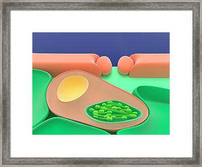 Cam Photosynthesis At Night Framed Print by Science Photo Library