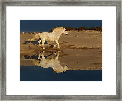 Camargue Horses And Reflection Framed Print by Adam Jones