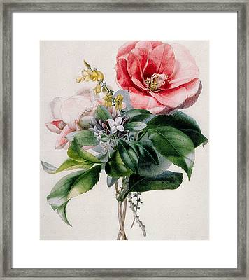 Camellia And Broom Framed Print by Marie-Anne