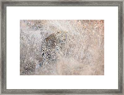 Camouflaged Leopard Framed Print by Christa Niederer