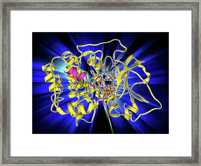 Camp-dependent Protein Kinase Molecule Framed Print by Laguna Design