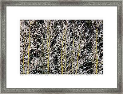 Canada, British Columbia, Mt Framed Print by Jaynes Gallery