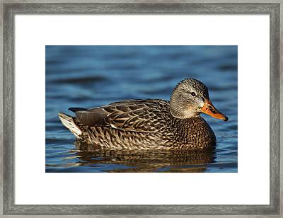 Canada, British Columbia, Westham Framed Print by Rick A Brown