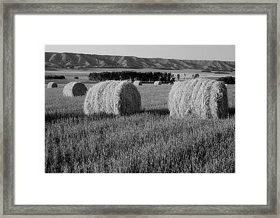 Canada, Manitoba, Rolled Hay Bales Framed Print by Jaynes Gallery