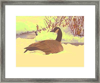 Canadian Goose Framed Print by Larry Campbell