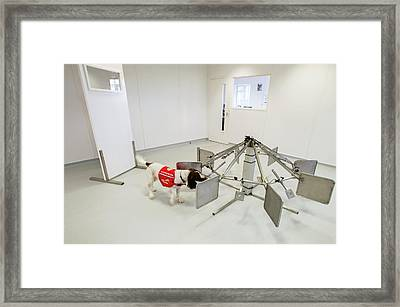 Cancer Detection Dog Training Framed Print
