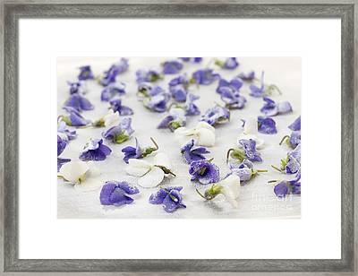 Candied Violets Framed Print by Elena Elisseeva