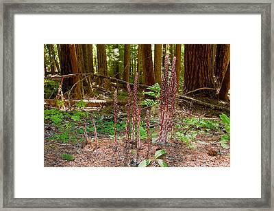 Candystick Framed Print by Rich Leighton