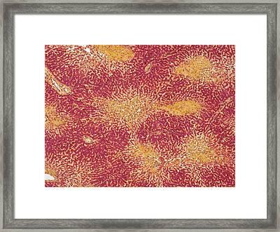 Canine Parvovirus Framed Print