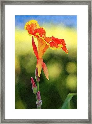 Canna Lily Framed Print by Karen Adams