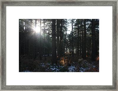 Framed Print featuring the photograph Cannock Chase by Jean Walker