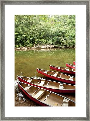 Canoeing The Macal River In Jungle Area Framed Print by Michele Benoy Westmorland