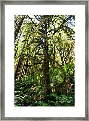 Capilano River Canyon 10 Framed Print by Terry Elniski