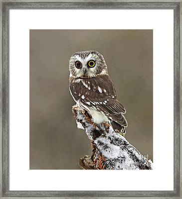 Captivation Framed Print