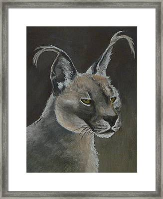 Caracal Cat Framed Print by Margaret Saheed