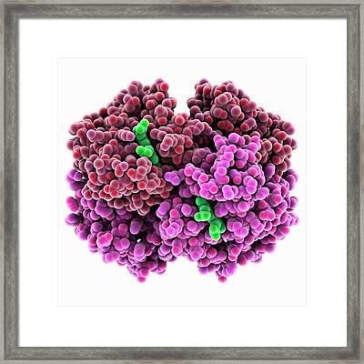Carboxyhaemoglobin Molecule Framed Print