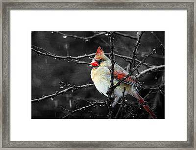 Framed Print featuring the photograph Cardinal On A Rainy Day by Trina  Ansel