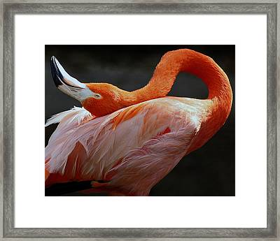 This Is My Sexy Pose.  See Something You Like? Framed Print