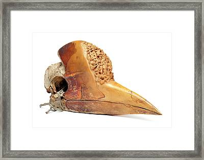 Carved Hornbill Skull Framed Print