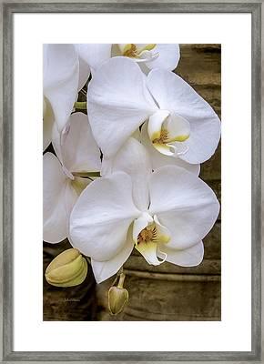 Cascade Of White Orchids Framed Print
