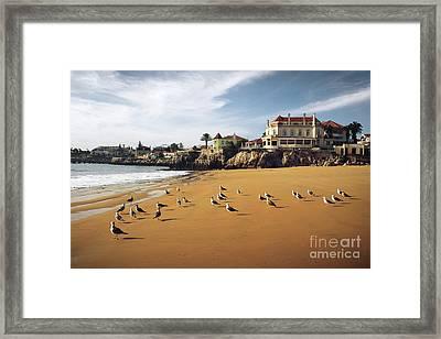 Cascais Seagulls Framed Print by Carlos Caetano