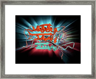 Caspase-3 And Inhibitor Framed Print by Laguna Design