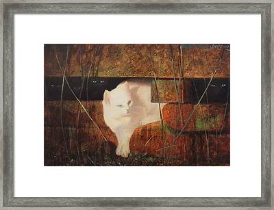 Castaway Cats Framed Print by Blue Sky