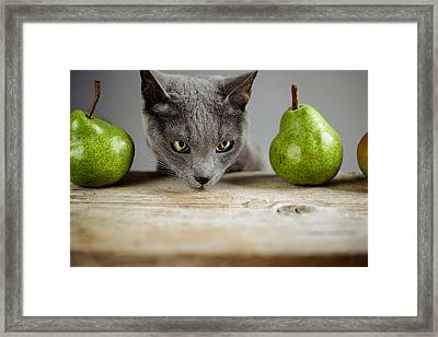 Cat And Pears Framed Print by Nailia Schwarz