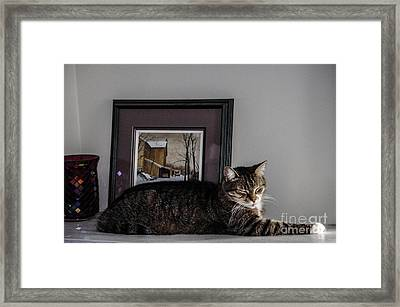 Cat At Rest Framed Print