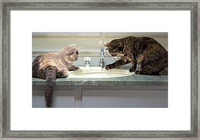 Cat Curiosity Framed Print