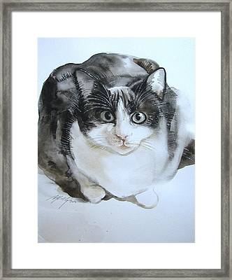 Cat In Black And White  Framed Print by Alfred Ng