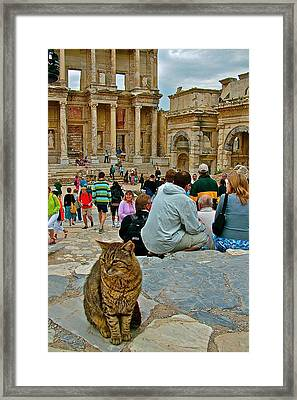 Cat Near Library Of Celsus In Ephesus-turkey Framed Print
