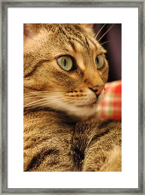 Cat On Plaid Couch Framed Print by Gary Marx