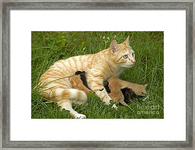 Cat With Kittens Framed Print by Jean-Michel Labat