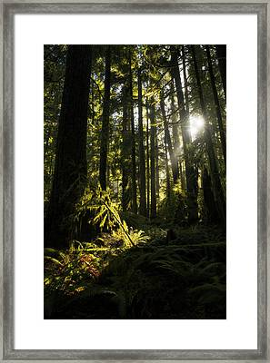Cathedral Grove, Macmillan Provincial Framed Print by Robert Postma