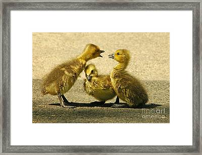 Caught In The Middle Framed Print by Olivia Hardwicke