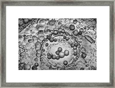 Cave Pearls In Black And White Framed Print
