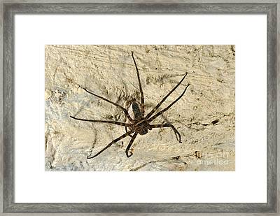 Cave Spider, Egg Sac And Spiderlings Framed Print by Robbie Shone
