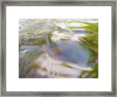 Cedar 15 Framed Print
