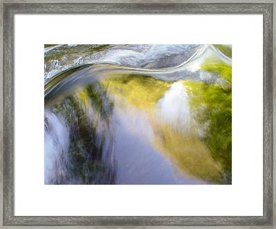 Cedar 17 Framed Print