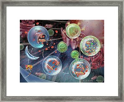 Cellular Autophagy Framed Print